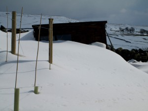 shed in snow