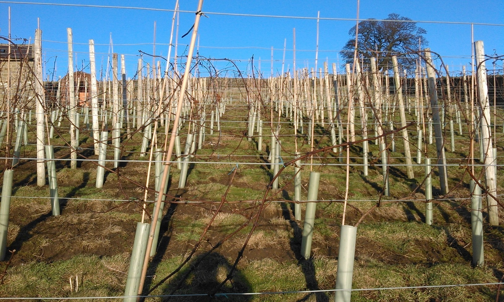 retirement vineyard