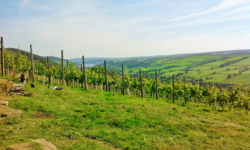 view of vineyard down the valley