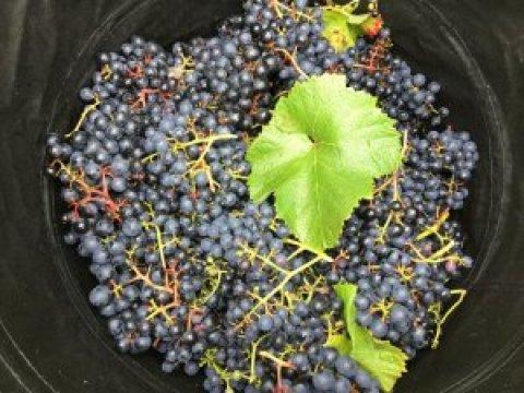 Vineyard 53 : The big one